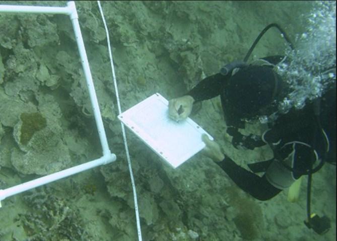 Países del Caribe testearán acidez del océano ligada a gases de efecto invernadero
