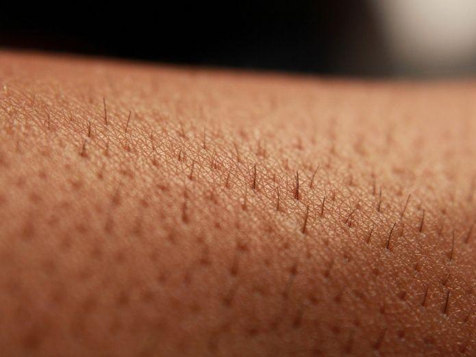 """Científicos chilenos crean piel """"fotosintética"""" que regenera tejidos"""