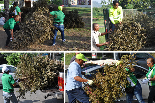 Inicia operativo de recolección de arbolitos