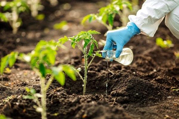 En busca de cultivos transgénicos superproductivos en un campo de Illinois
