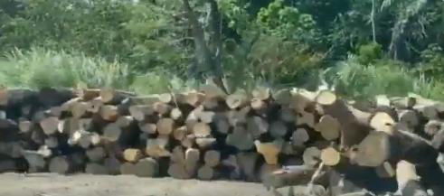 Mi Ambiente aclara que madera será utilizada en programa de resocialización