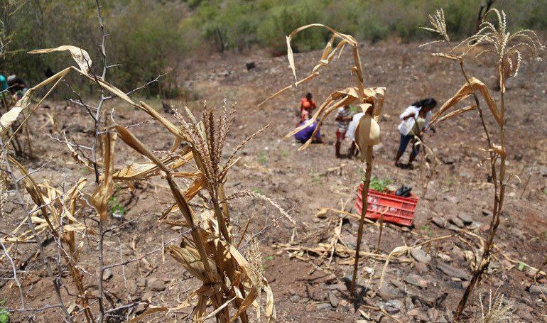 Panamá implementará sistema de la FAO para contrarrestar efectos de la sequía