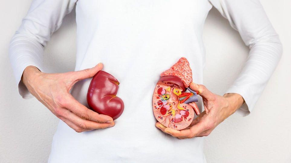 Día Mundial del Riñón; Uno de cada diez panameños presenta afectación renal