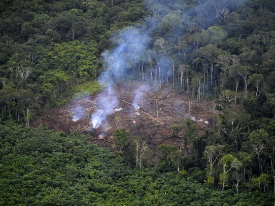 El 2020, otro año negro para el medio ambiente en Latinoamérica