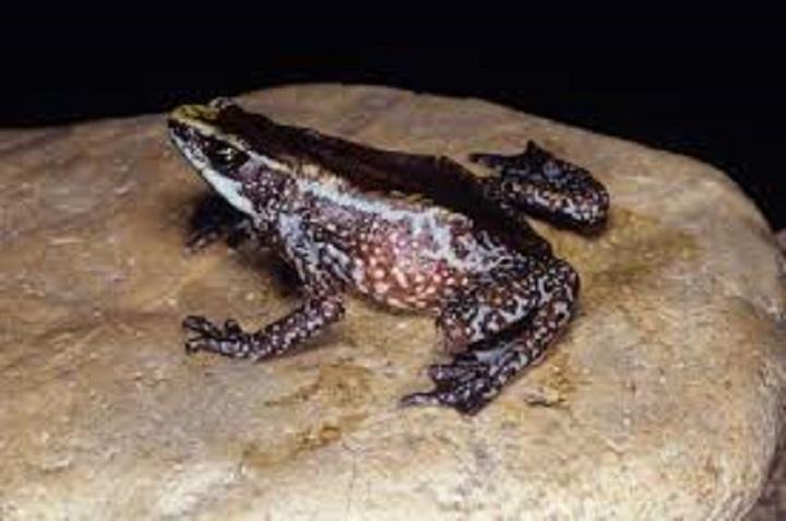 El cambio climático favorece la hecatombe de los anfibios, según un informe