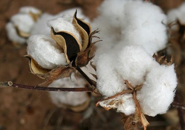 """EEUU bloquea importación de algodón de """"mano de obra esclava"""" de provincia china"""