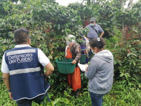 Realizan inspección preventiva de trabajo infantil en fincas cafetaleras de Chiriquí