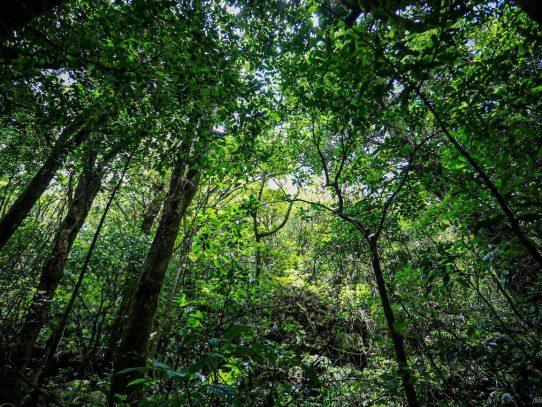 Banco Mundial concede a Costa Rica USD 60 millones para comunidades que protegen bosques