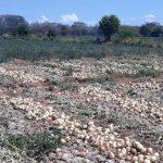 Comisión de la Cadena Agroalimentaria se reúne por las importaciones