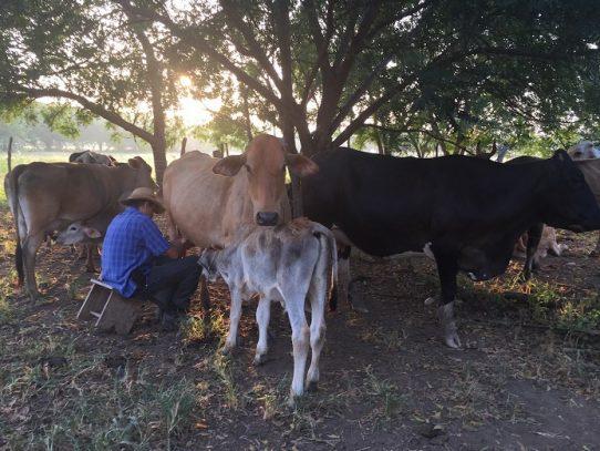 Panamá Solidario prioriza producción nacional e impulsa sector agropecuario
