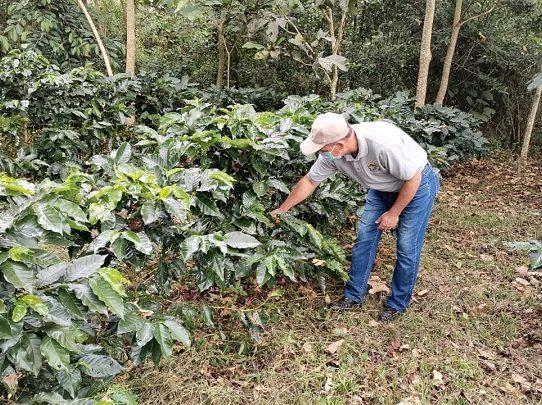 Programa de Reforestación en Cafetales