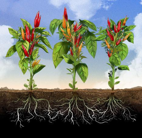 ¿Qué tan egoístas son las plantas? Hagamos un análisis desde la raíz