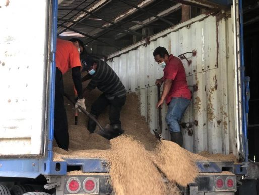 Más de 654 mil 63 quintales de arroz llegaron a los silos
