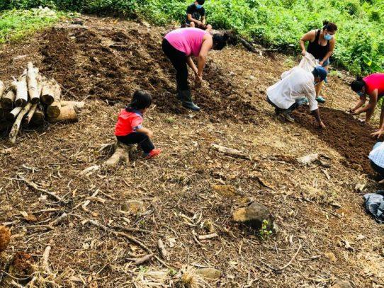 Huertos caseros en Coclé brindan oportunidad de resocialización a jóvenes