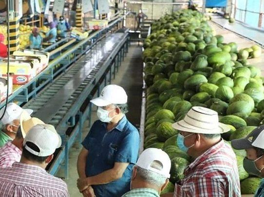 MIDA gana mercados para melón, sandía y zapallo en EE.UU.