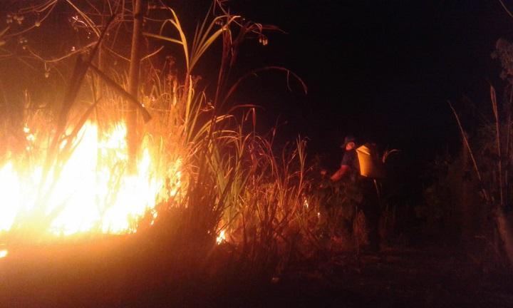 Bomberos de Panamá: Los incendios de masa vegetal afectan la salud