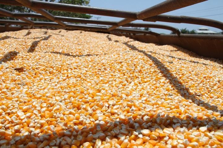 Cadena agroalimentaria de maíz coordina inicio de la zafra