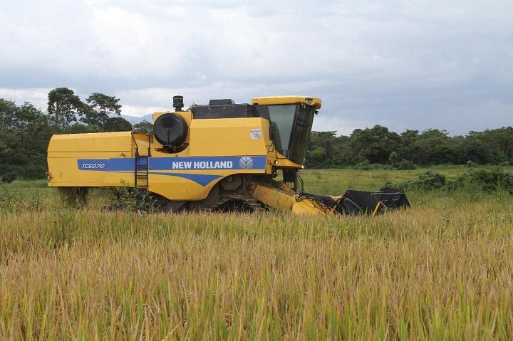 Aumentan a 11 mil hectáreas, la siembra de arroz para este ciclo agrícola