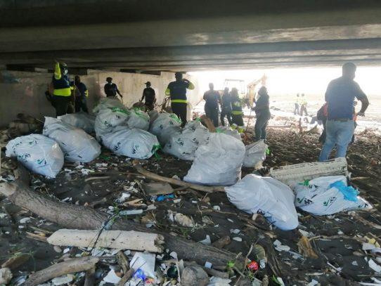 La AAUD y Mi Ambiente realizan limpieza en zonas de playa y manglar