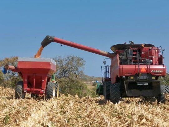 Productores de arroz, maíz y leche han recibido los pagos de parte del Gobierno