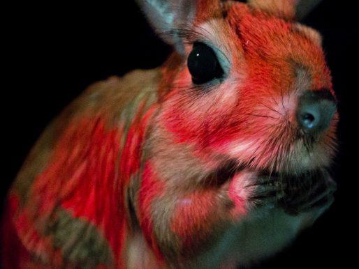 Conoce al integrante más reciente del club de los mamíferos fluorescentes