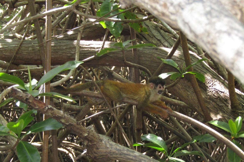 13 especies son rescatadas de residencias en la provincia de Chiriquí