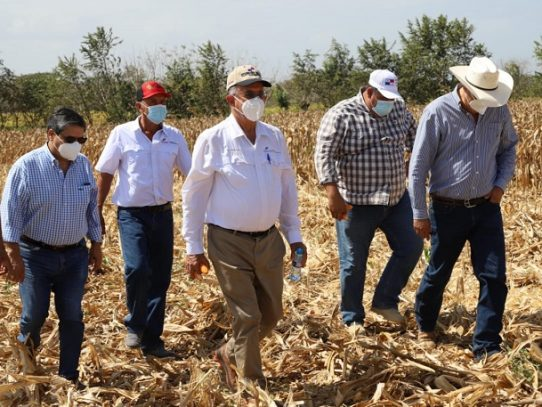 Al menos 5 millones de balboas se les ha pagado a productores de maíz
