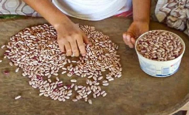 Pequeños productores de porotos de Herrera y Veraguas comercializan con apoyo del IMA