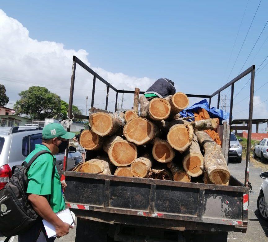 Decomisan tuca en Panamá Norte en acción de Mi Ambiente y Policía Nacional