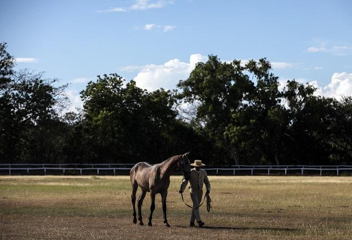 El caballo comprende mejor cuando se le habla como a un bebé