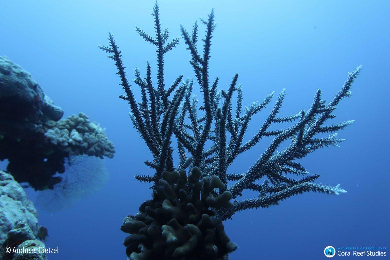 Medio billón de corales: primer recuento mundial impulsa a repensar los riesgos de extinción
