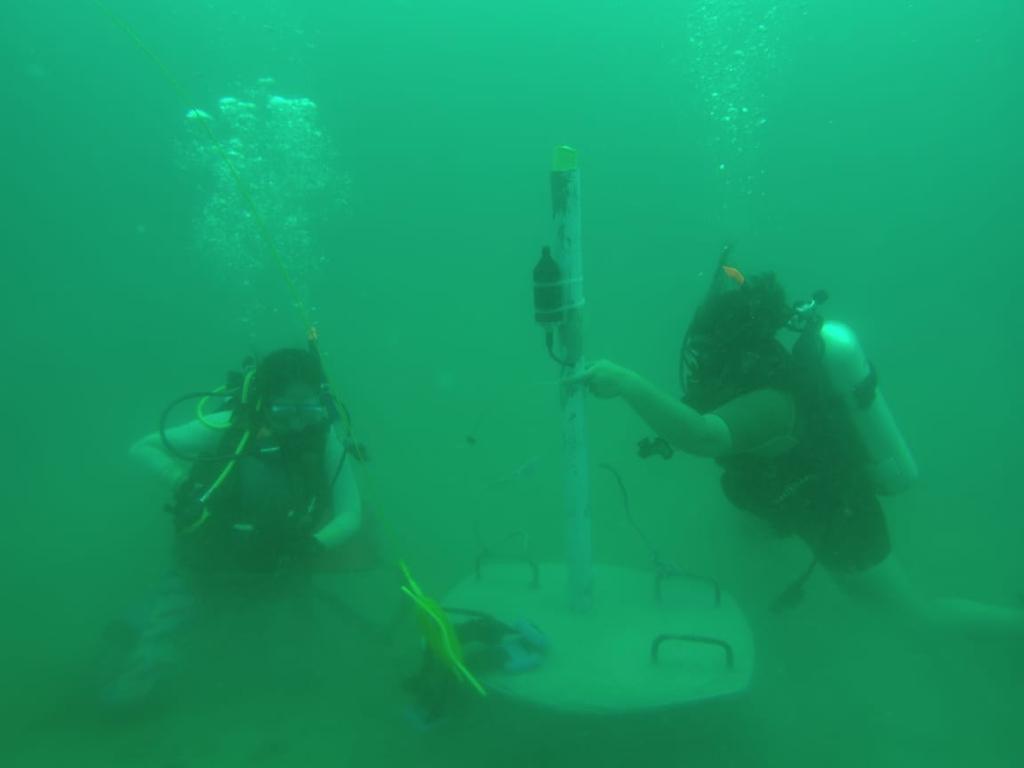 Grabarán sonidos de especies marinas y  los producidos por el hombre