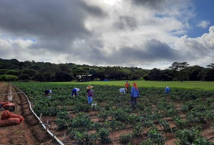 Sector agropecuario de Panamá contará con moderna plataforma de registro de productos