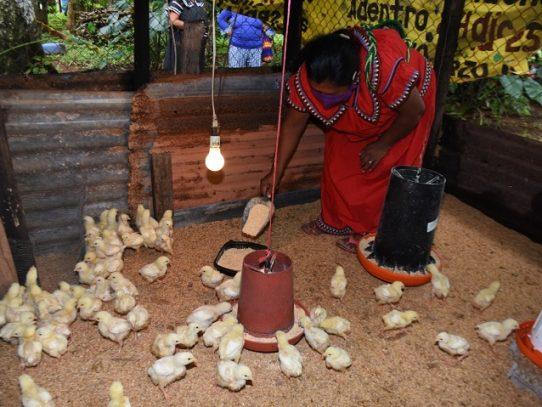 La avicultura a mediana escala, un emprendimiento que está empoderando a las mujeres rurales