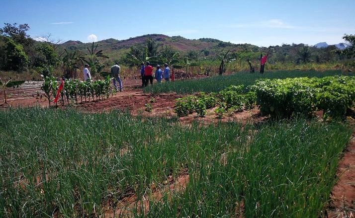 MIDES impulsa instalación de sistema de riego en beneficio de mujeres de Natá