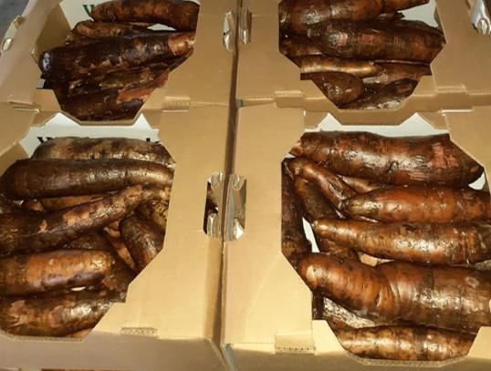 Hoy se exportaron 22 toneladas de yuca y sandía a mercados de Filadelfia
