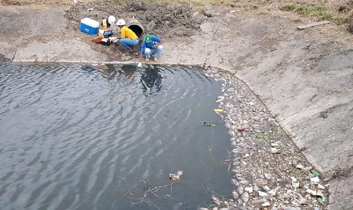 MiAmbiente inicia investigación por mortandad de peces en Colón