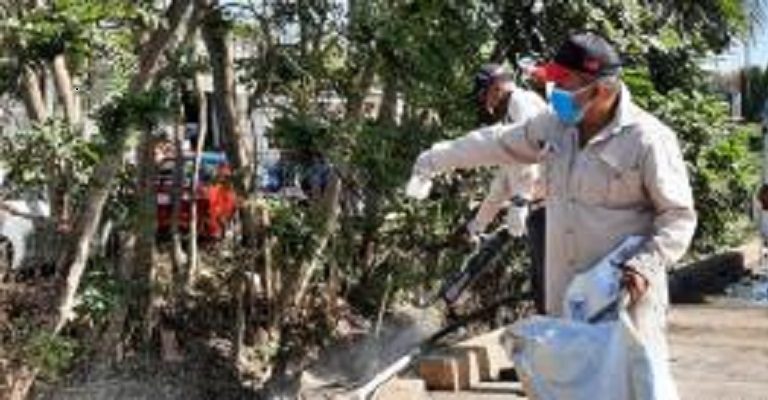 Minsa: Eliminar los criaderos fundamental para evitar el dengue