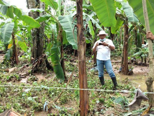 Sector agro de Bocas del Toro golpeado por el mal tiempo