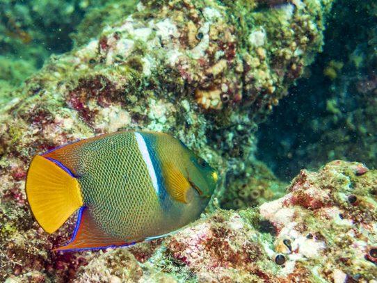 ATP anunció avances del plan turístico sostenible para Coiba y Santa Catalina