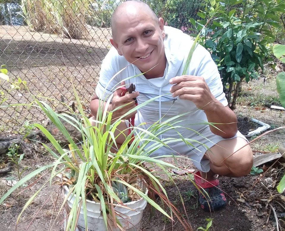 El delicioso té de nuestros campos: hierba de limón