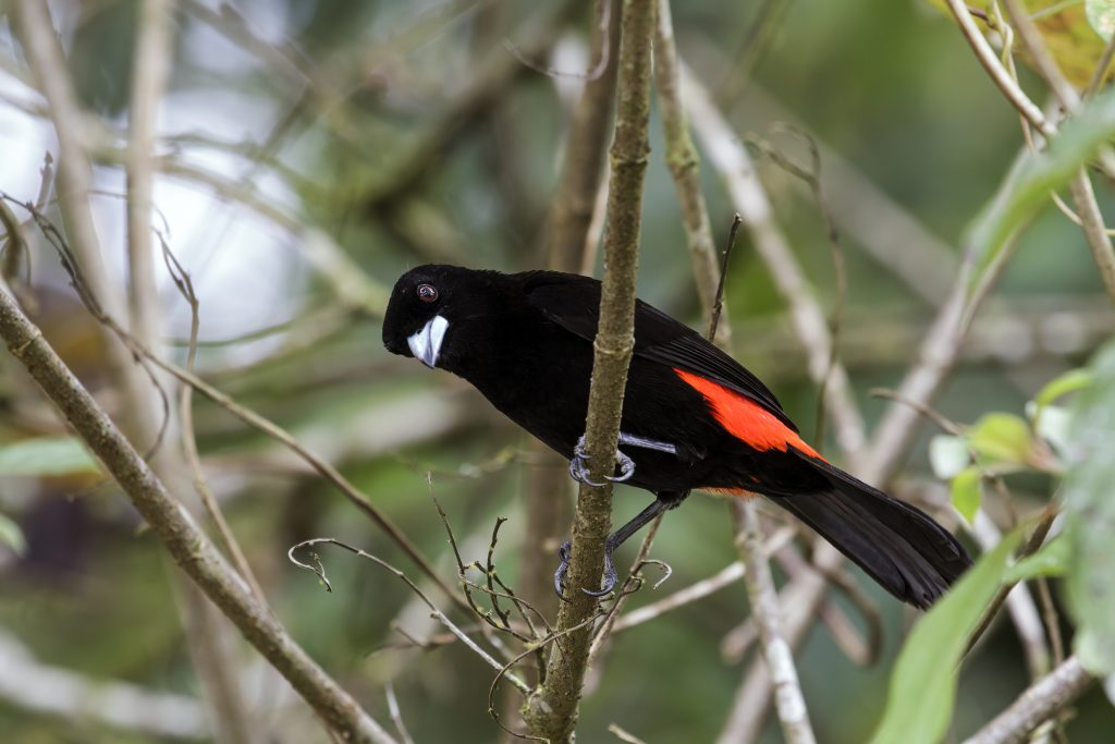 Aves cambian de colores