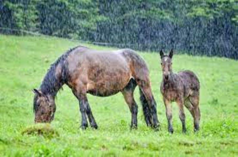 Alerta: Época de lluvias puede afectar la salud de los animales