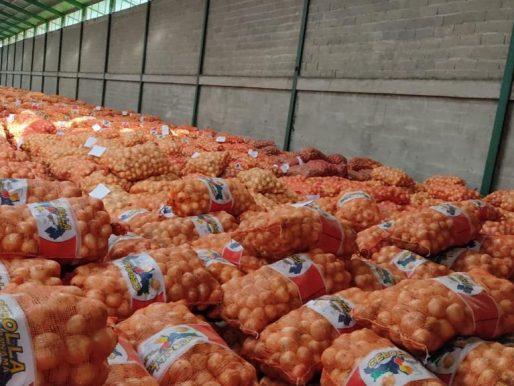 MIDA compra cebolla a 257 productores coclesanos afectados por lluvias