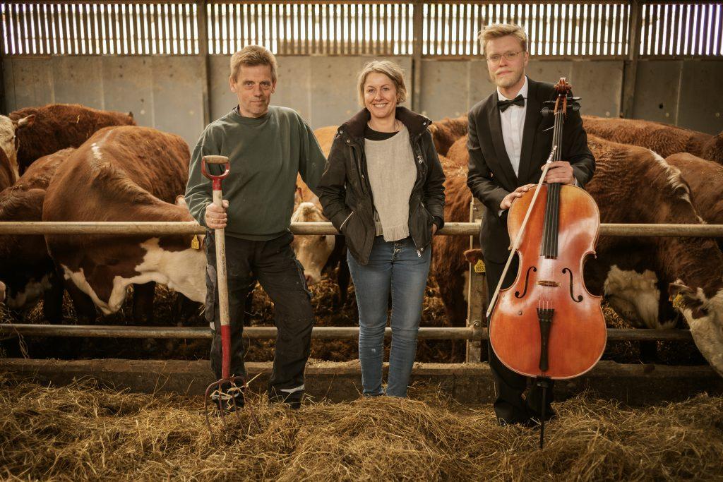 Los ganaderos llevan música para sus vacas
