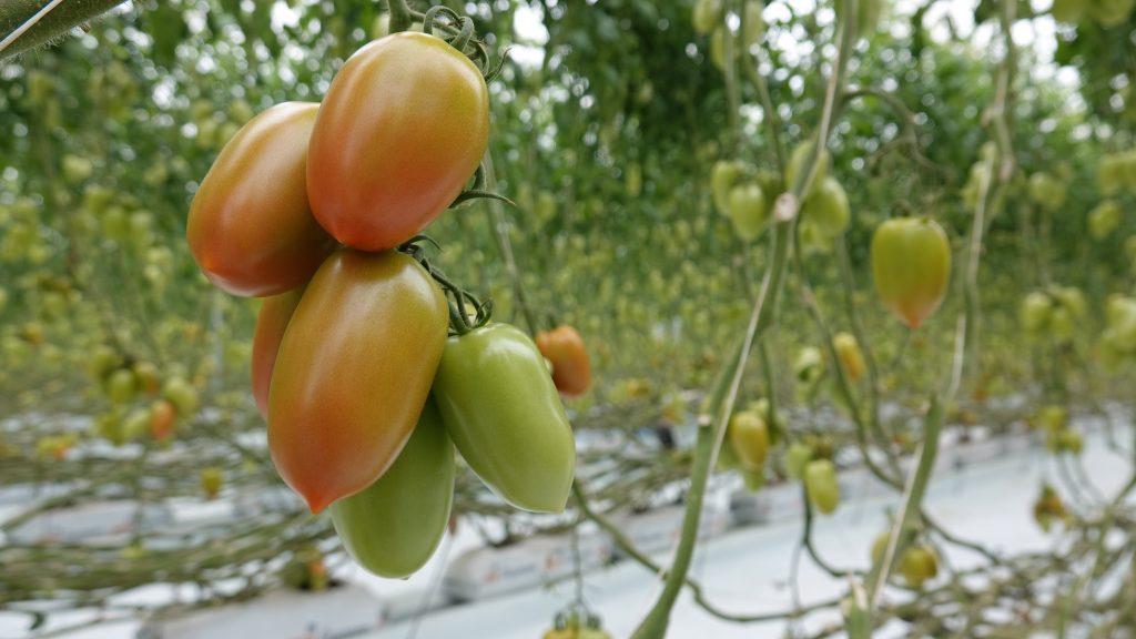 BNP fortalece la actividad agrícola