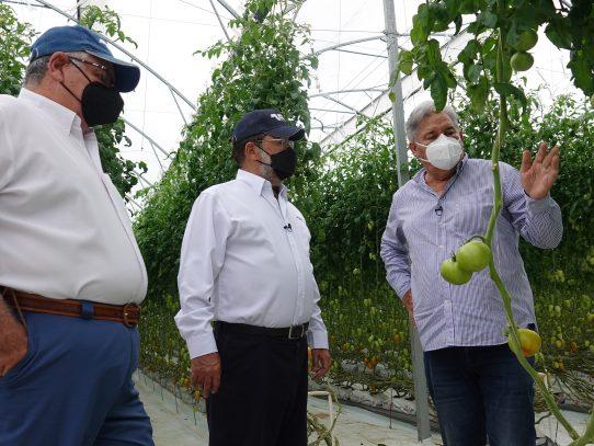 Banconal promueve producción sostenible de hortalizas en 2do. Día de Campo virtual