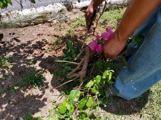 En mayo, aproveche para podar y plantar