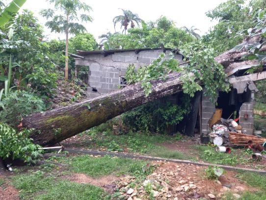 Lluvia de esta tarde dejó 17 árboles caídos sobre viviendas