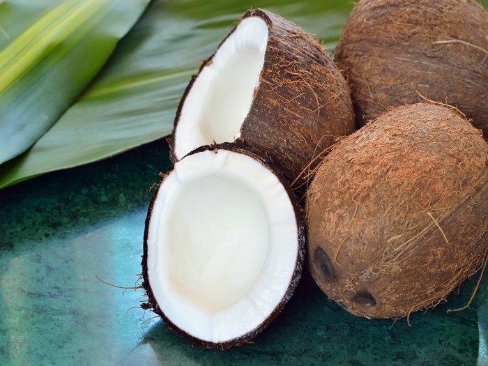 Se reactiva la cosecha de coco en Colón